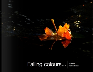 Falling Colours - Portfolio Cover